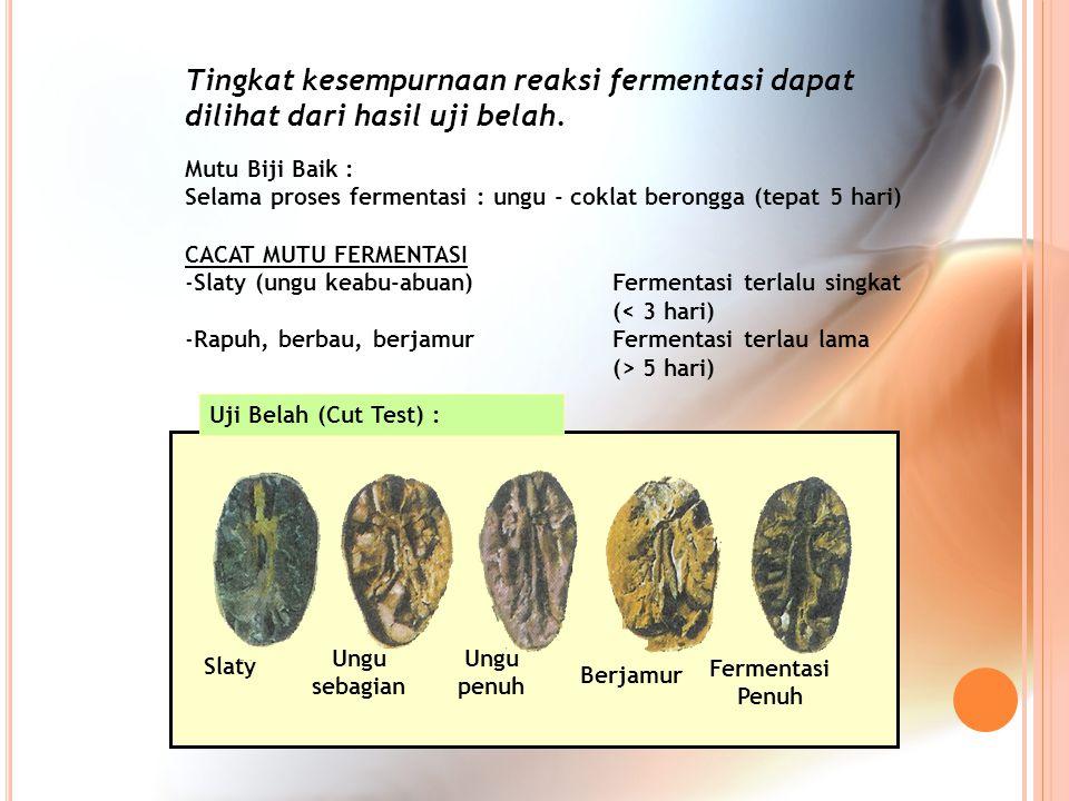 Slaty Ungu sebagian Ungu penuh Berjamur Fermentasi Penuh Uji Belah (Cut Test) : Tingkat kesempurnaan reaksi fermentasi dapat dilihat dari hasil uji be