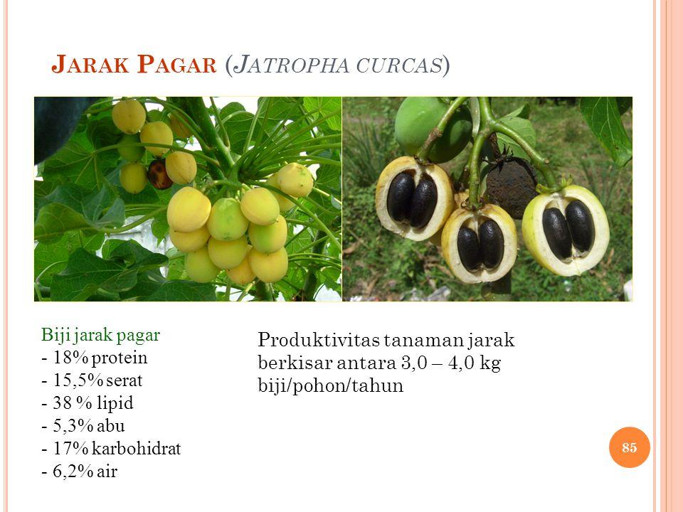 J ARAK P AGAR ( J ATROPHA CURCAS ) Biji jarak pagar - 18% protein - 15,5% serat - 38 % lipid - 5,3% abu - 17% karbohidrat - 6,2% air Produktivitas tan