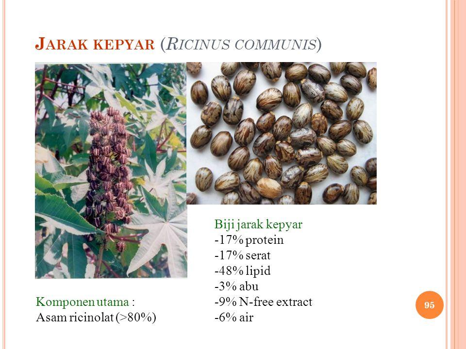 J ARAK KEPYAR ( R ICINUS COMMUNIS ) Komponen utama : Asam ricinolat (>80%) Biji jarak kepyar -17% protein -17% serat -48% lipid -3% abu -9% N-free ext