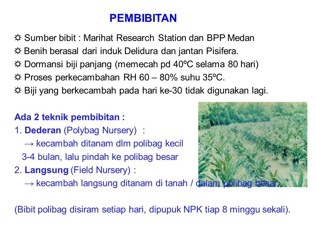 ☼ Sumber bibit : Marihat Research Station dan BPP Medan ☼ Benih berasal dari induk Delidura dan jantan Pisifera. ☼ Dormansi biji panjang (memecah pd 4