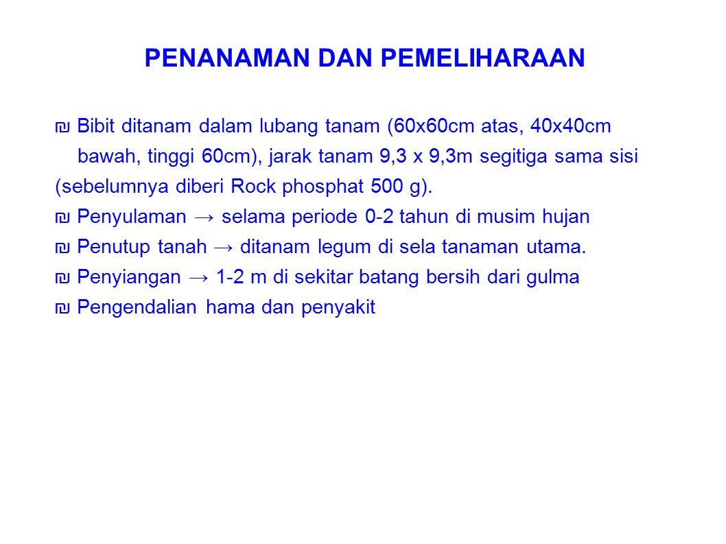 ₪ Bibit ditanam dalam lubang tanam (60x60cm atas, 40x40cm bawah, tinggi 60cm), jarak tanam 9,3 x 9,3m segitiga sama sisi (sebelumnya diberi Rock phosp