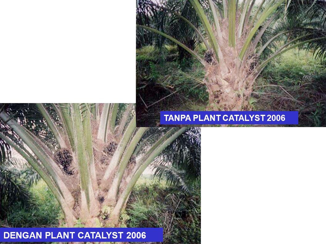 DENGAN PLANT CATALYST 2006 TANPA PLANT CATALYST 2006