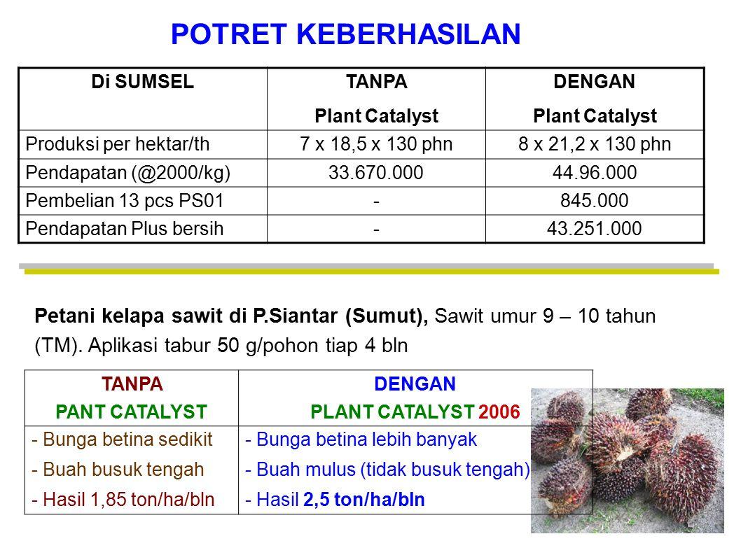 Di SUMSEL TANPA Plant Catalyst DENGAN Plant Catalyst Produksi per hektar/th7 x 18,5 x 130 phn8 x 21,2 x 130 phn Pendapatan (@2000/kg)33.670.00044.96.0