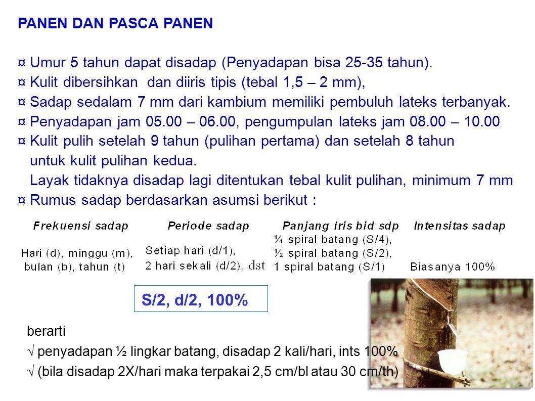 PANEN DAN PASCA PANEN ¤ Umur 5 tahun dapat disadap (Penyadapan bisa 25-35 tahun). ¤ Kulit dibersihkan dan diiris tipis (tebal 1,5 – 2 mm), ¤ Sadap sed
