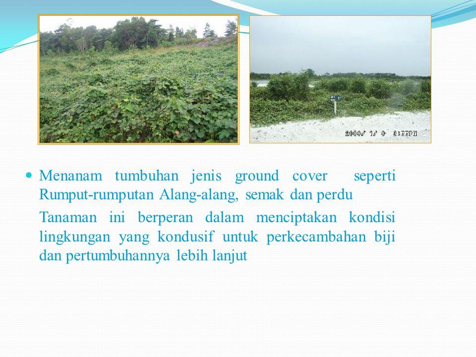 Menanam tumbuhan jenis ground cover seperti Rumput-rumputan Alang-alang, semak dan perdu Tanaman ini berperan dalam menciptakan kondisi lingkungan yang kondusif untuk perkecambahan biji dan pertumbuhannya lebih lanjut