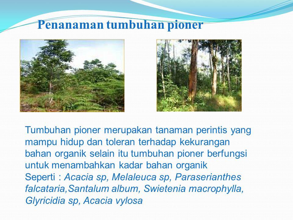 Penanaman tumbuhan pioner Tumbuhan pioner merupakan tanaman perintis yang mampu hidup dan toleran terhadap kekurangan bahan organik selain itu tumbuha