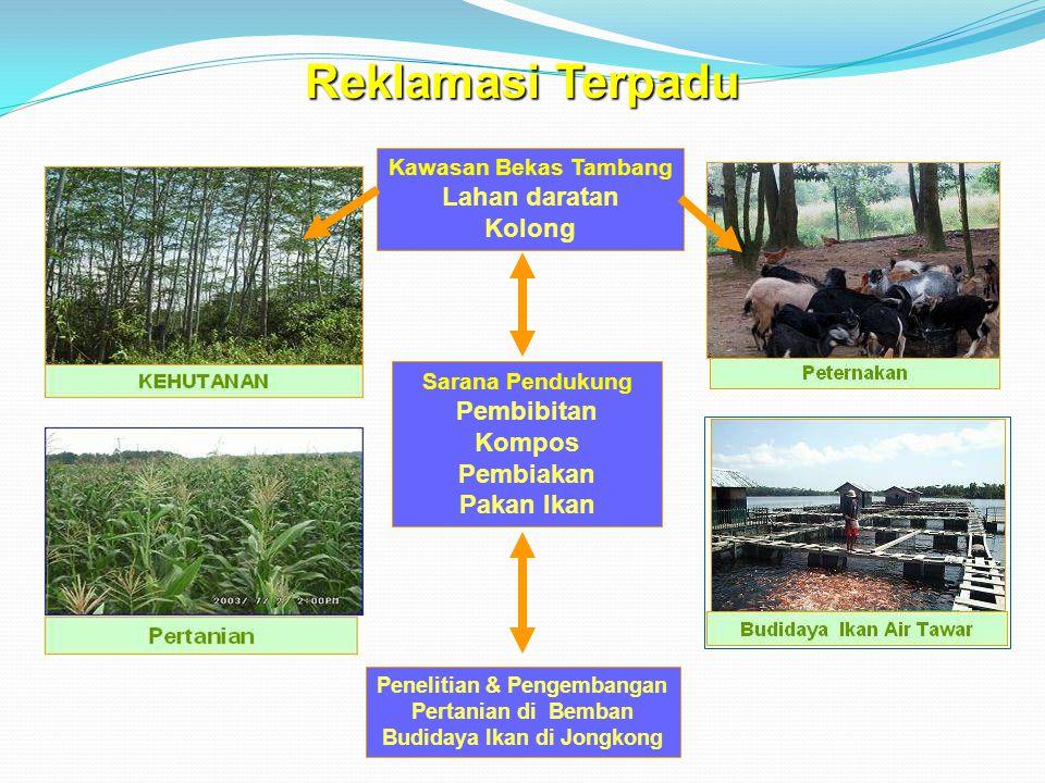 Kawasan Bekas Tambang Lahan daratan Kolong Sarana Pendukung Pembibitan Kompos Pembiakan Pakan Ikan Penelitian & Pengembangan Pertanian di Bemban Budidaya Ikan di Jongkong Reklamasi Terpadu