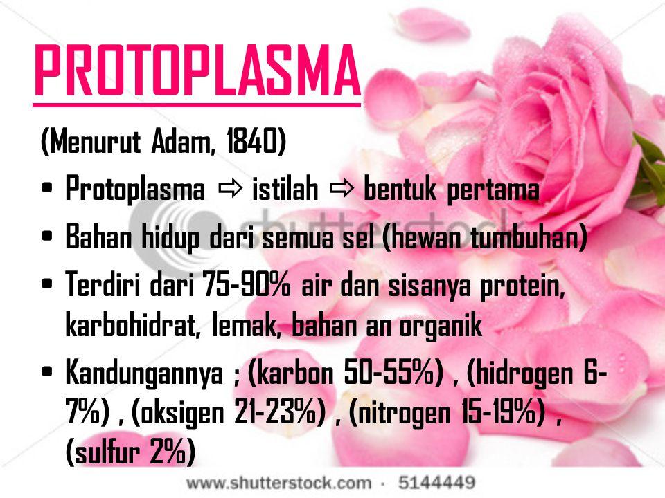 PROTOPLASMA (Menurut Adam, 1840) Protoplasma  istilah  bentuk pertama Bahan hidup dari semua sel (hewan tumbuhan) Terdiri dari 75-90% air dan sisanya protein, karbohidrat, lemak, bahan an organik Kandungannya ; (karbon 50-55%), (hidrogen 6- 7%), (oksigen 21-23%), (nitrogen 15-19%), (sulfur 2%)