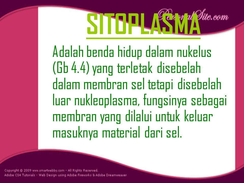 SITOPLASMA Adalah benda hidup dalam nukelus (Gb 4.4) yang terletak disebelah dalam membran sel tetapi disebelah luar nukleoplasma, fungsinya sebagai membran yang dilalui untuk keluar masuknya material dari sel.