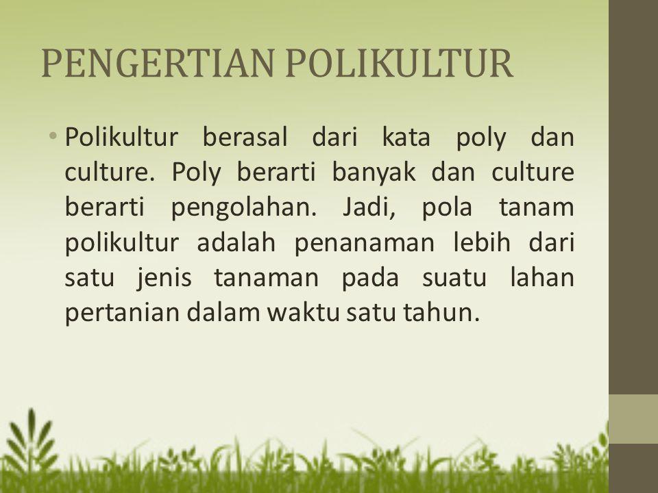 PENGERTIAN POLIKULTUR Polikultur berasal dari kata poly dan culture. Poly berarti banyak dan culture berarti pengolahan. Jadi, pola tanam polikultur a