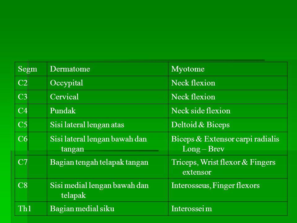 SegmDermatomeMyotome C2OccypitalNeck flexion C3CervicalNeck flexion C4PundakNeck side flexion C5Sisi lateral lengan atasDeltoid & Biceps C6Sisi latera
