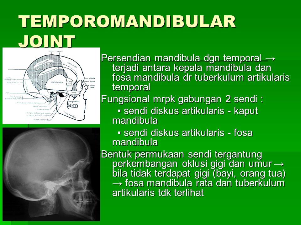 Persendian mandibula dgn temporal → terjadi antara kepala mandibula dan fosa mandibula dr tuberkulum artikularis temporal Fungsional mrpk gabungan 2 s