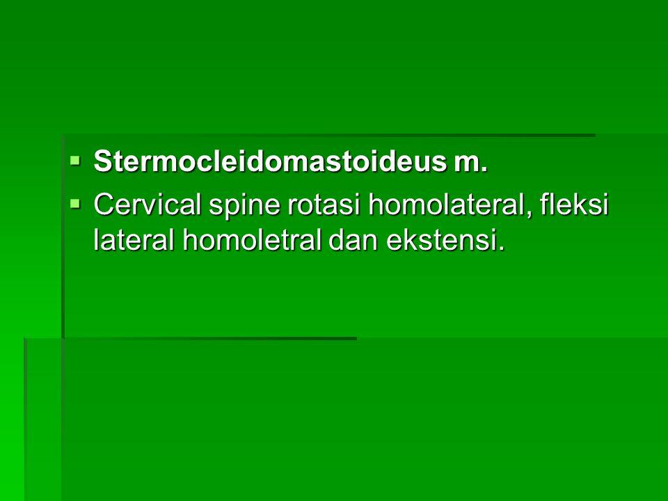  Stermocleidomastoideus m.  Cervical spine rotasi homolateral, fleksi lateral homoletral dan ekstensi.