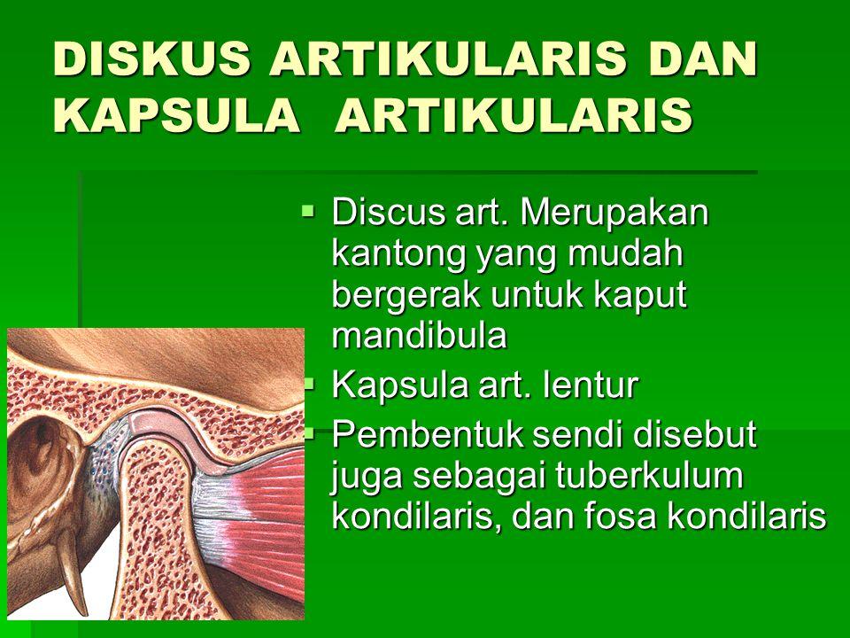 LIGAMENTS 1.Lig.kapsular: sekeliling fosa mandibula-tuberkulum artikularis 2.