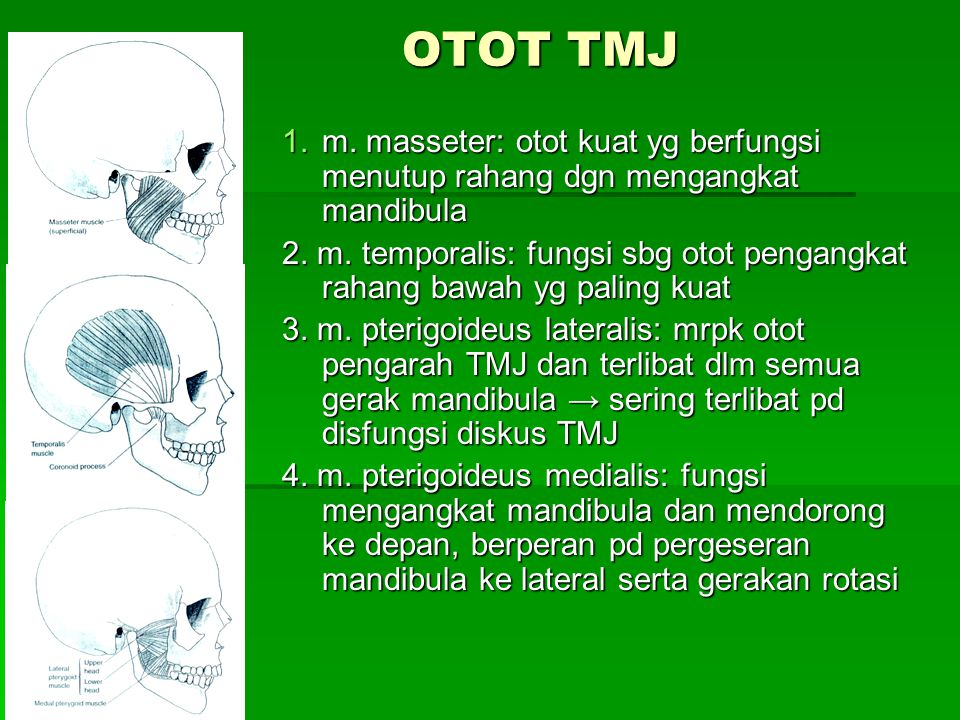 OTOT TMJ 1.m. masseter: otot kuat yg berfungsi menutup rahang dgn mengangkat mandibula 2. m. temporalis: fungsi sbg otot pengangkat rahang bawah yg pa