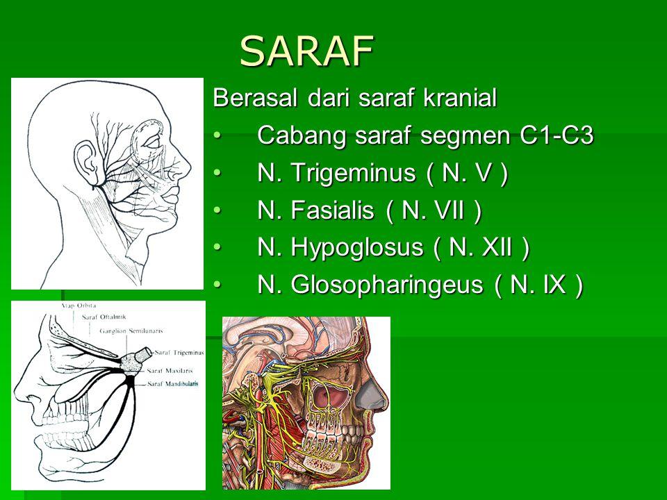 SARAF Berasal dari saraf kranial Cabang saraf segmen C1-C3Cabang saraf segmen C1-C3 N. Trigeminus ( N. V )N. Trigeminus ( N. V ) N. Fasialis ( N. VII