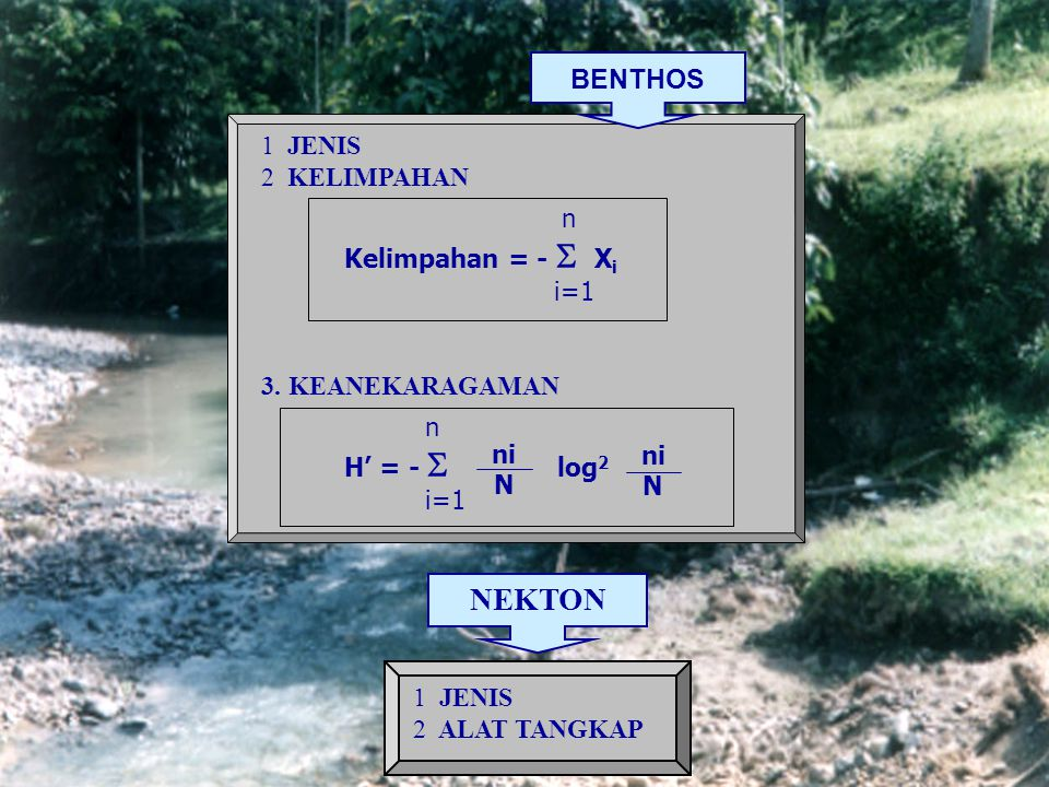 PLANKTON 1 JENIS 2 KELIMPAHAN Kelimpahan = x x x x 3 KEANEKARAGAMAN n H' = -  log 2 i=1 PWPW 1v1v PLPL VPVP Ind.