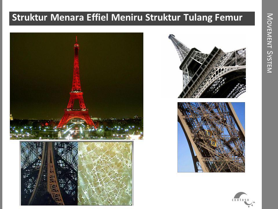 M OVEMENT S YSTEM Struktur Menara Effiel Meniru Struktur Tulang Femur