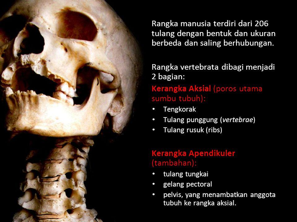 Rangka manusia terdiri dari 206 tulang dengan bentuk dan ukuran berbeda dan saling berhubungan.