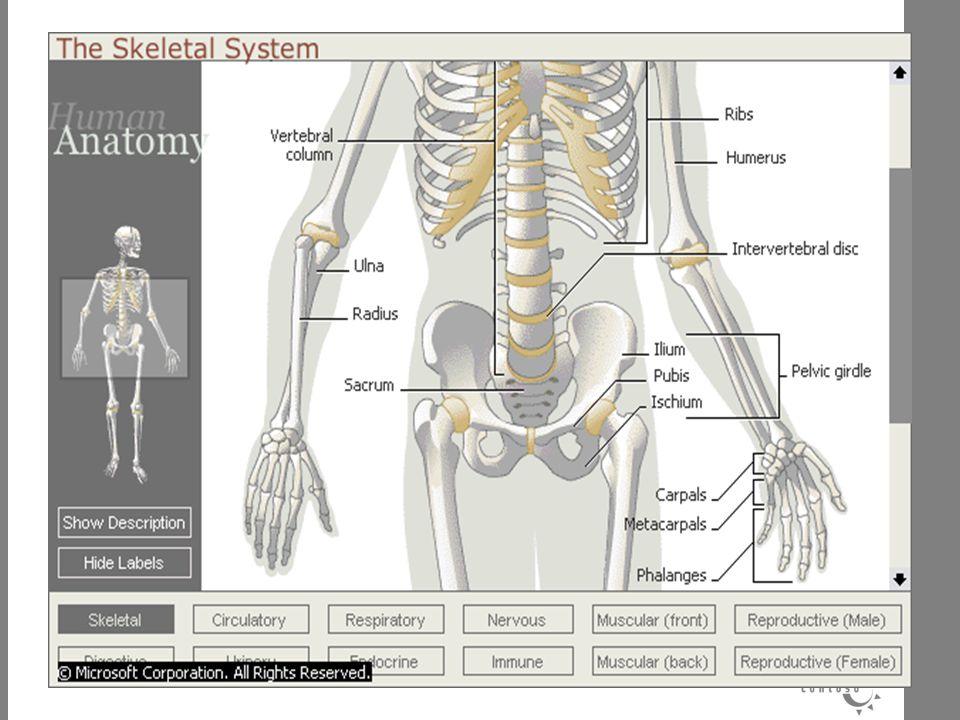 SENDI Merupakan hubungan antar tulang sehingga leluasa digerakkan.