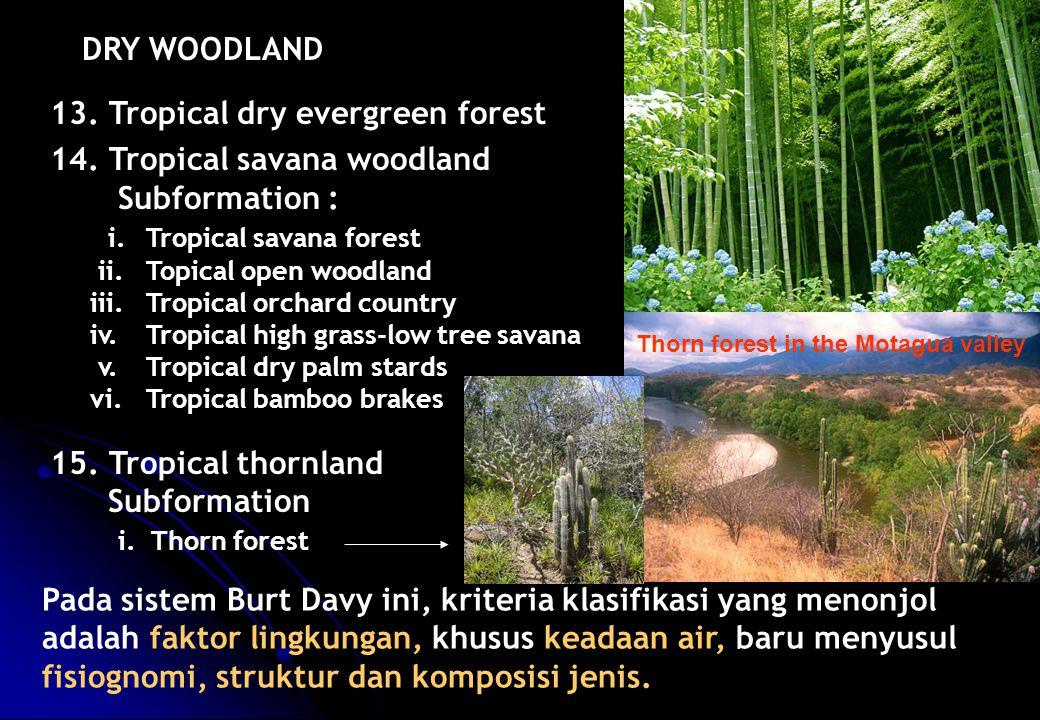 13. Tropical dry evergreen forest 14. Tropical savana woodland Subformation : i.Tropical savana forest ii.Topical open woodland iii.Tropical orchard c