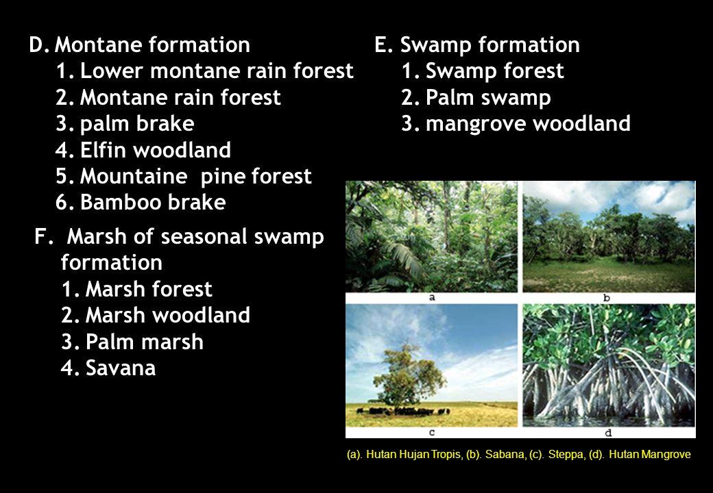 D.Montane formation 1.Lower montane rain forest 2.Montane rain forest 3.palm brake 4.Elfin woodland 5.Mountaine pine forest 6.Bamboo brake E.Swamp for