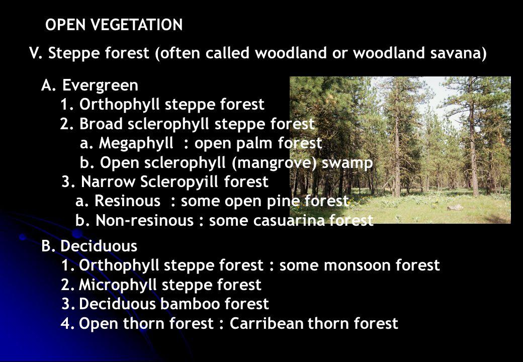 V. Steppe forest (often called woodland or woodland savana) OPEN VEGETATION A. Evergreen 1. Orthophyll steppe forest 2. Broad sclerophyll steppe fores