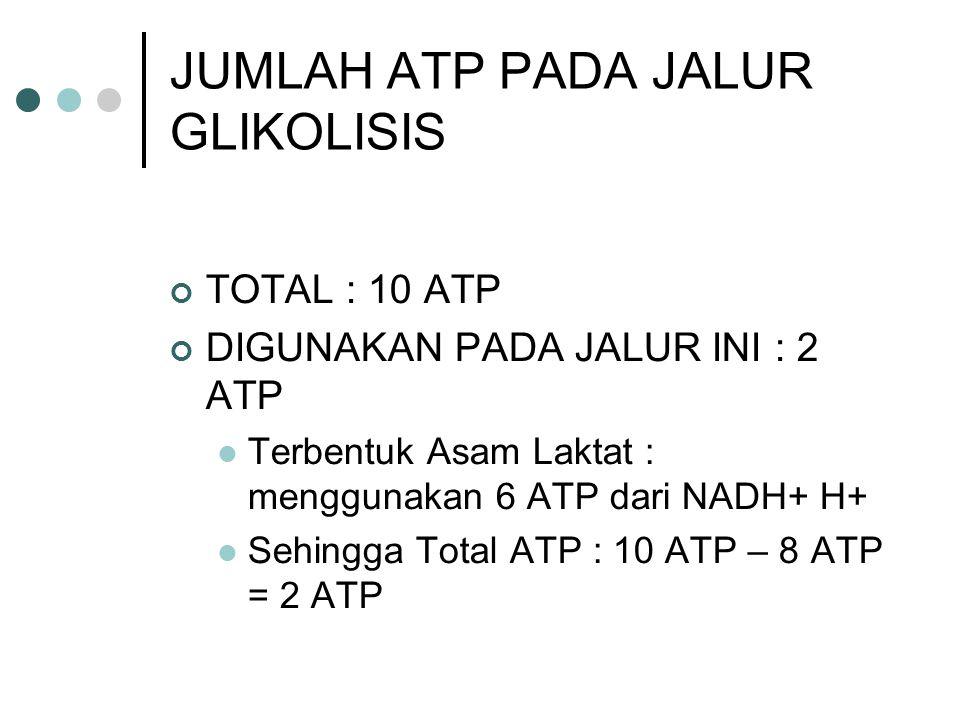 JUMLAH ATP PADA JALUR GLIKOLISIS TOTAL : 10 ATP DIGUNAKAN PADA JALUR INI : 2 ATP Terbentuk Asam Laktat : menggunakan 6 ATP dari NADH+ H+ Sehingga Tota