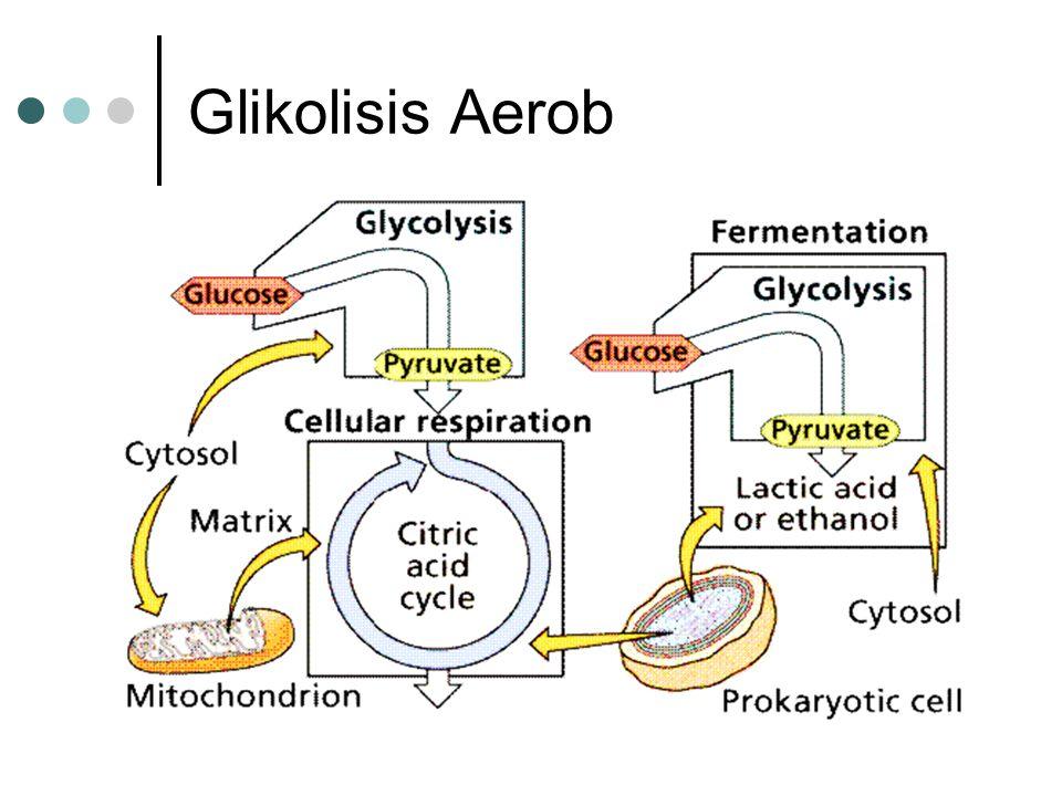 Glikolisis Aerob