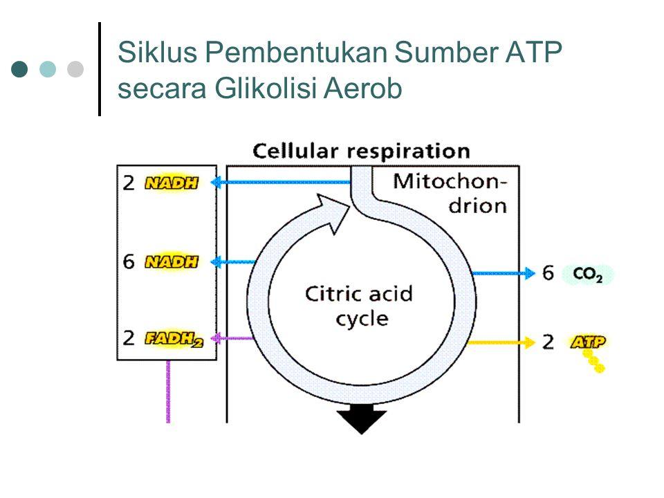 Siklus Pembentukan Sumber ATP secara Glikolisi Aerob