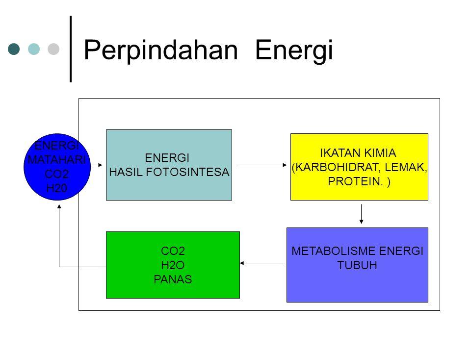 Perpindahan Energi ENERGI HASIL FOTOSINTESA IKATAN KIMIA (KARBOHIDRAT, LEMAK, PROTEIN. ) METABOLISME ENERGI TUBUH ENERGI MATAHARI CO2 H20 CO2 H2O PANA