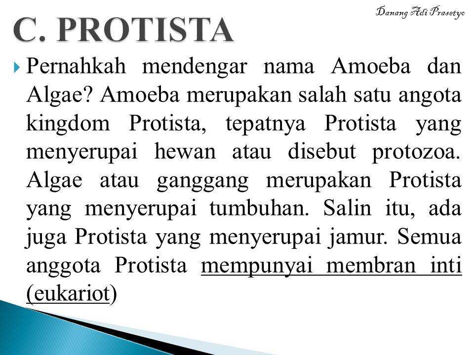  Pernahkah mendengar nama Amoeba dan Algae? Amoeba merupakan salah satu angota kingdom Protista, tepatnya Protista yang menyerupai hewan atau disebut