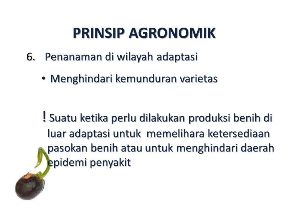 6.Penanaman di wilayah adaptasi Menghindari kemunduran varietas Menghindari kemunduran varietas ! Suatu ketika perlu dilakukan produksi benih di luar