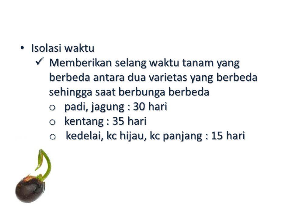 Isolasi waktu Isolasi waktu Memberikan selang waktu tanam yang berbeda antara dua varietas yang berbeda sehingga saat berbunga berbeda Memberikan selang waktu tanam yang berbeda antara dua varietas yang berbeda sehingga saat berbunga berbeda o padi, jagung : 30 hari o kentang : 35 hari o kedelai, kc hijau, kc panjang : 15 hari