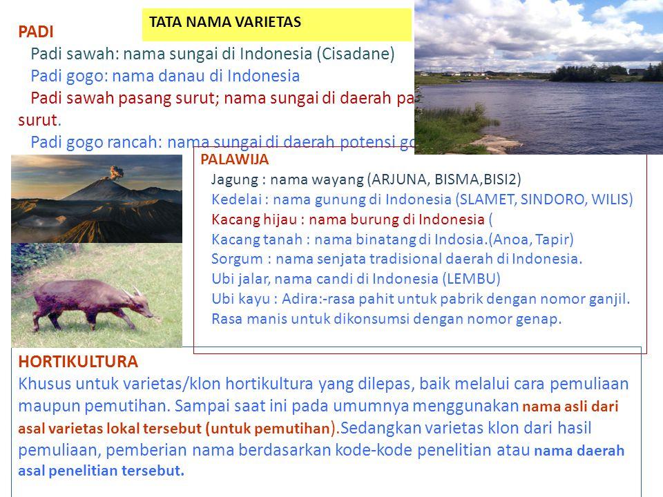 PADI Padi sawah: nama sungai di Indonesia (Cisadane) Padi gogo: nama danau di Indonesia Padi sawah pasang surut; nama sungai di daerah pasang surut. P