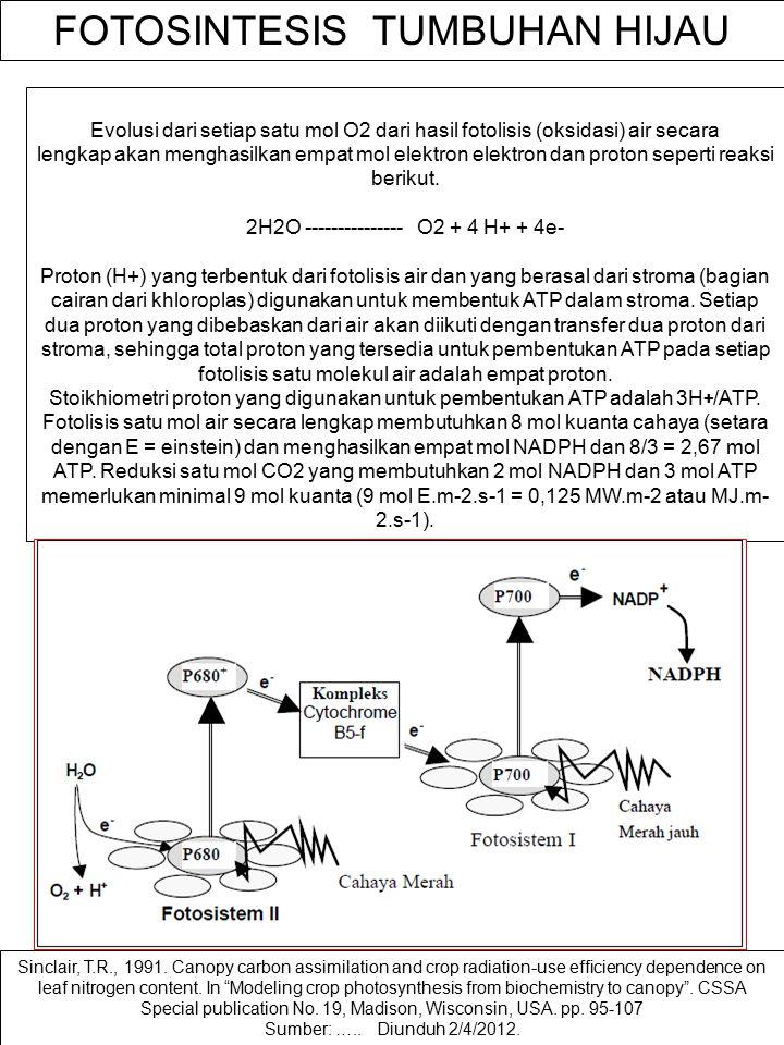 PRINSIP DASAR PENGARUH ENERGI CAHAYA MATAHARI TERHADAP EKSITASI ELEKTRON Sinclair, T.R. and Muchow, R.C, 1999. Radiation use efficiency. Adv. Agronomy