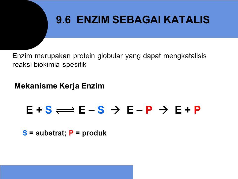 Mekanisme Kerja Enzim E + S E – S  E – P  E + P S = substrat; P = produk 9.6 ENZIM SEBAGAI KATALIS Enzim merupakan protein globular yang dapat mengk