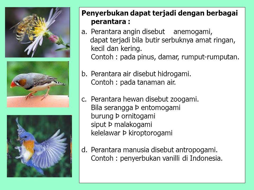 Penyerbukan dapat terjadi dengan berbagai perantara : a.Perantara angin disebut anemogami, dapat terjadi bila butir serbuknya amat ringan, kecil dan k