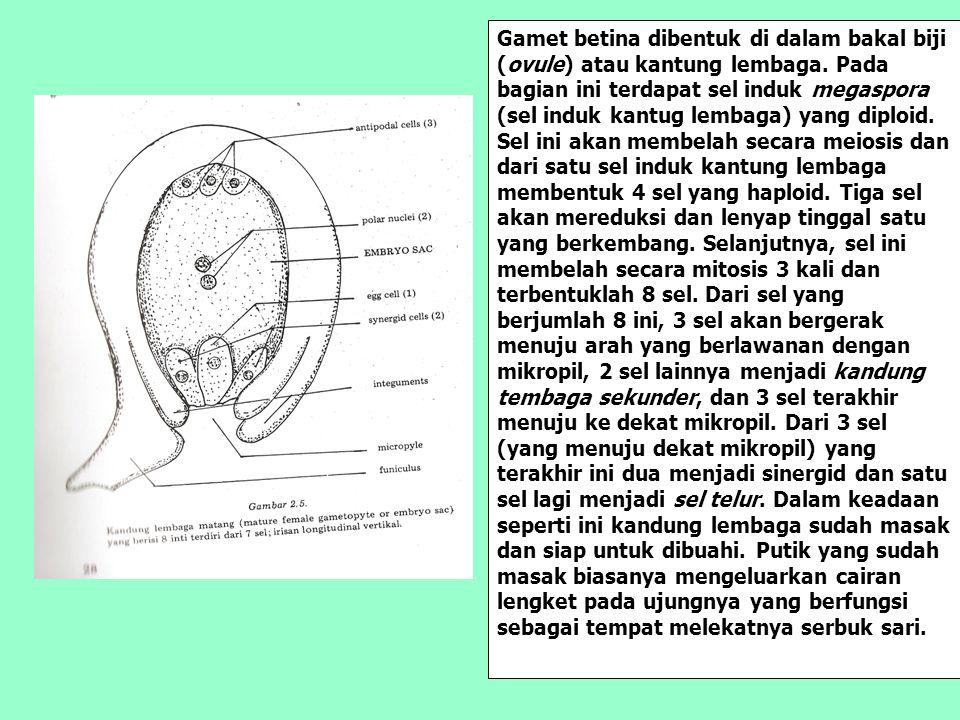 Gamet betina dibentuk di dalam bakal biji (ovule) atau kantung lembaga. Pada bagian ini terdapat sel induk megaspora (sel induk kantug lembaga) yang d