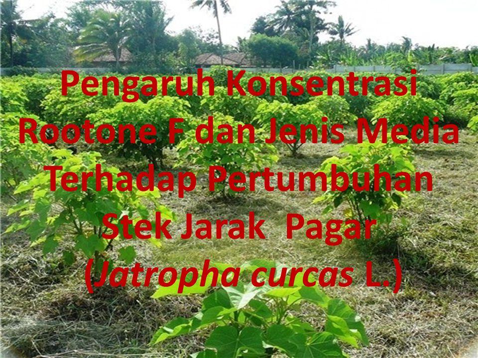 Pp Pengaruh Konsentrasi Rootone F dan Jenis Media Terhadap Pertumbuhan Stek Jarak Pagar (Jatropha curcas L.)