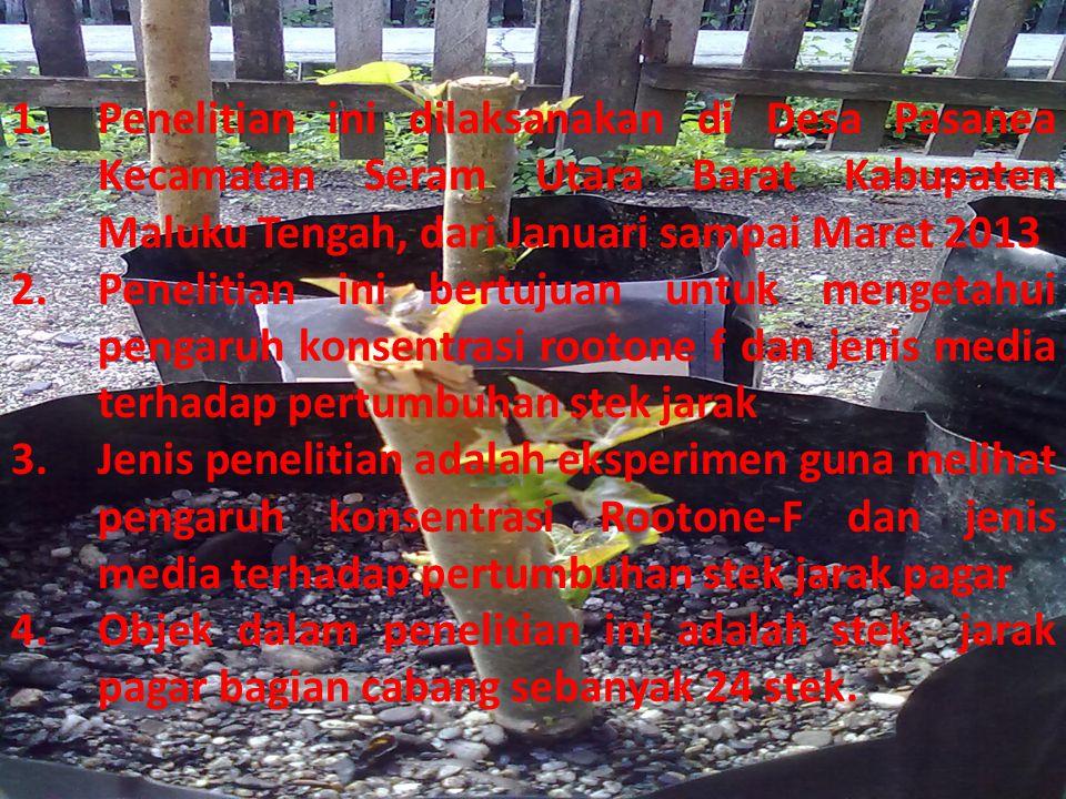 1.Penelitian ini dilaksanakan di Desa Pasanea Kecamatan Seram Utara Barat Kabupaten Maluku Tengah, dari Januari sampai Maret 2013 2.Penelitian ini ber