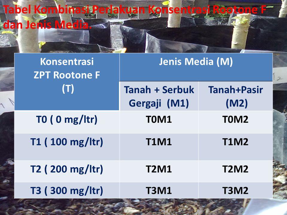 Konsentrasi ZPT Rootone F (T) Jenis Media (M) Tanah + Serbuk Gergaji (M1) Tanah+Pasir (M2) T0 ( 0 mg/ltr)T0M1T0M2 T1 ( 100 mg/ltr)T1M1T1M2 T2 ( 200 mg
