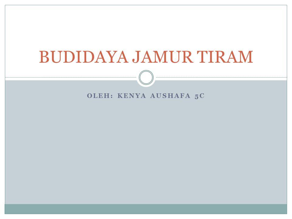 OLEH: KENYA AUSHAFA 5C BUDIDAYA JAMUR TIRAM