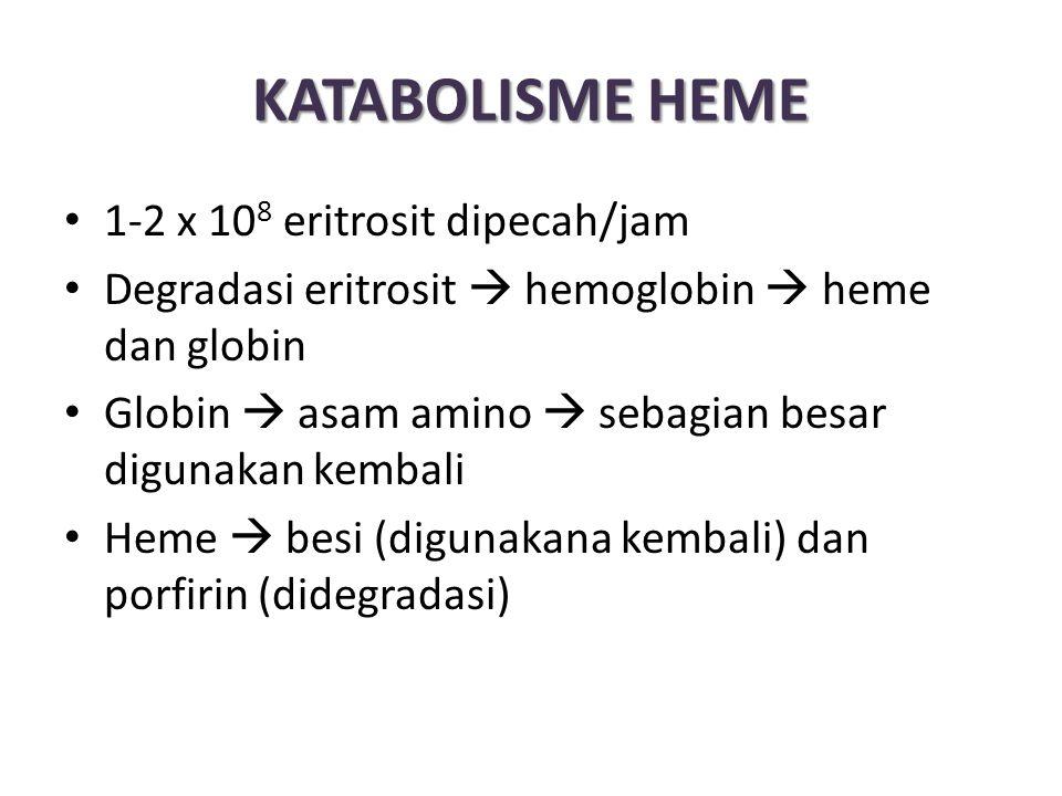 KATABOLISME HEME 1-2 x 10 8 eritrosit dipecah/jam Degradasi eritrosit  hemoglobin  heme dan globin Globin  asam amino  sebagian besar digunakan kembali Heme  besi (digunakana kembali) dan porfirin (didegradasi)