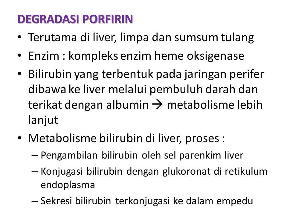 DEGRADASI PORFIRIN Terutama di liver, limpa dan sumsum tulang Enzim : kompleks enzim heme oksigenase Bilirubin yang terbentuk pada jaringan perifer dibawa ke liver melalui pembuluh darah dan terikat dengan albumin  metabolisme lebih lanjut Metabolisme bilirubin di liver, proses : – Pengambilan bilirubin oleh sel parenkim liver – Konjugasi bilirubin dengan glukoronat di retikulum endoplasma – Sekresi bilirubin terkonjugasi ke dalam empedu