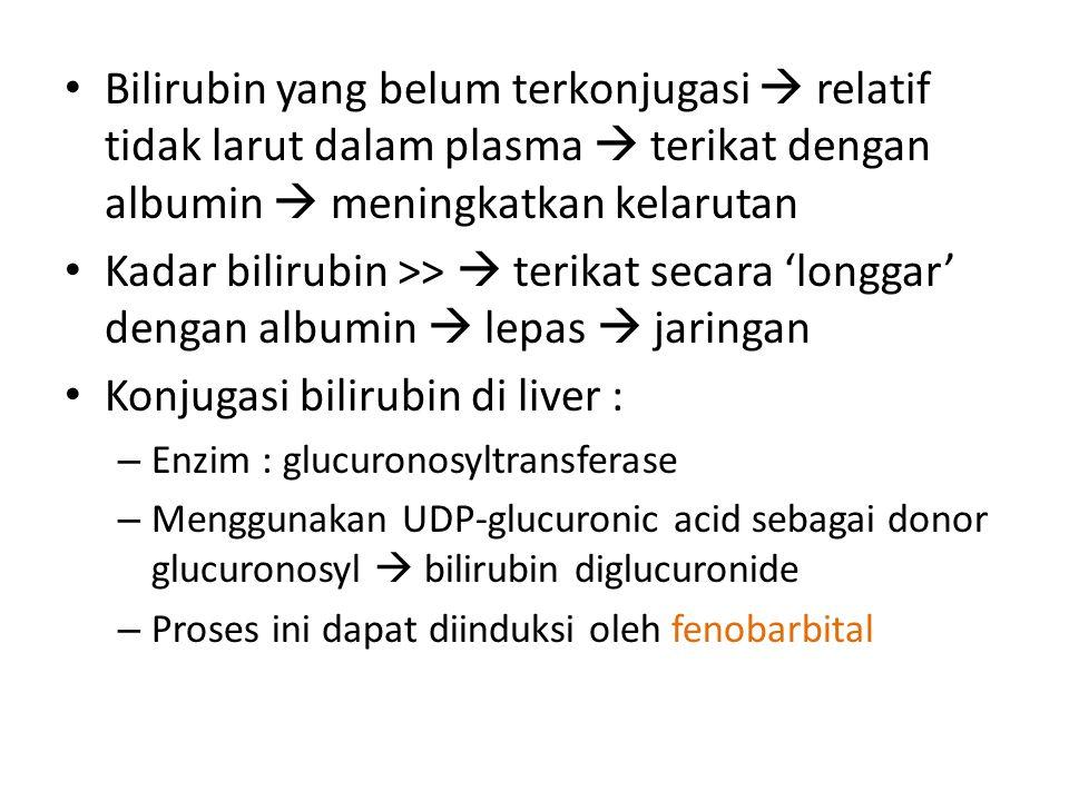 Bilirubin yang belum terkonjugasi  relatif tidak larut dalam plasma  terikat dengan albumin  meningkatkan kelarutan Kadar bilirubin >>  terikat secara 'longgar' dengan albumin  lepas  jaringan Konjugasi bilirubin di liver : – Enzim : glucuronosyltransferase – Menggunakan UDP-glucuronic acid sebagai donor glucuronosyl  bilirubin diglucuronide – Proses ini dapat diinduksi oleh fenobarbital