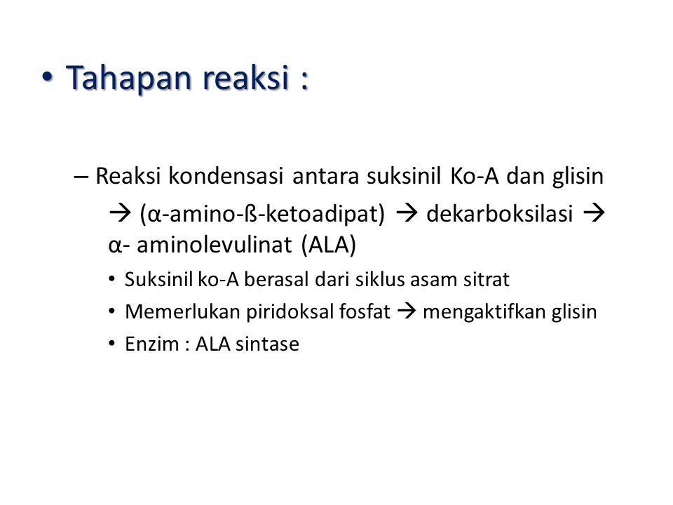 Tahapan reaksi : Tahapan reaksi : – Reaksi kondensasi antara suksinil Ko-A dan glisin  (α-amino-ß-ketoadipat)  dekarboksilasi  α- aminolevulinat (ALA) Suksinil ko-A berasal dari siklus asam sitrat Memerlukan piridoksal fosfat  mengaktifkan glisin Enzim : ALA sintase