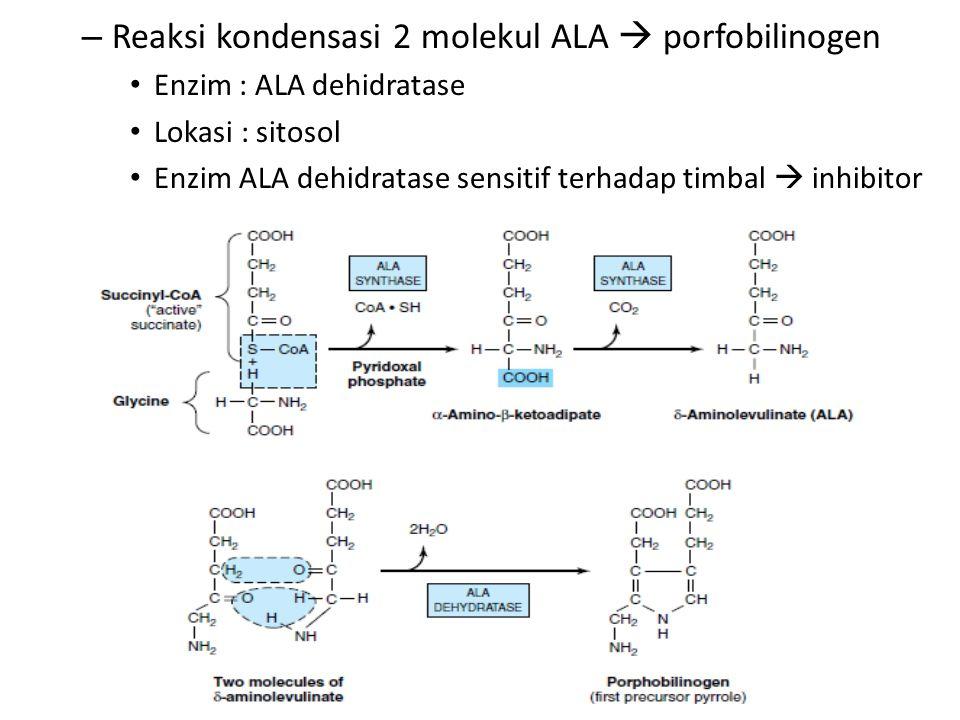 – Reaksi kondensasi 2 molekul ALA  porfobilinogen Enzim : ALA dehidratase Lokasi : sitosol Enzim ALA dehidratase sensitif terhadap timbal  inhibitor