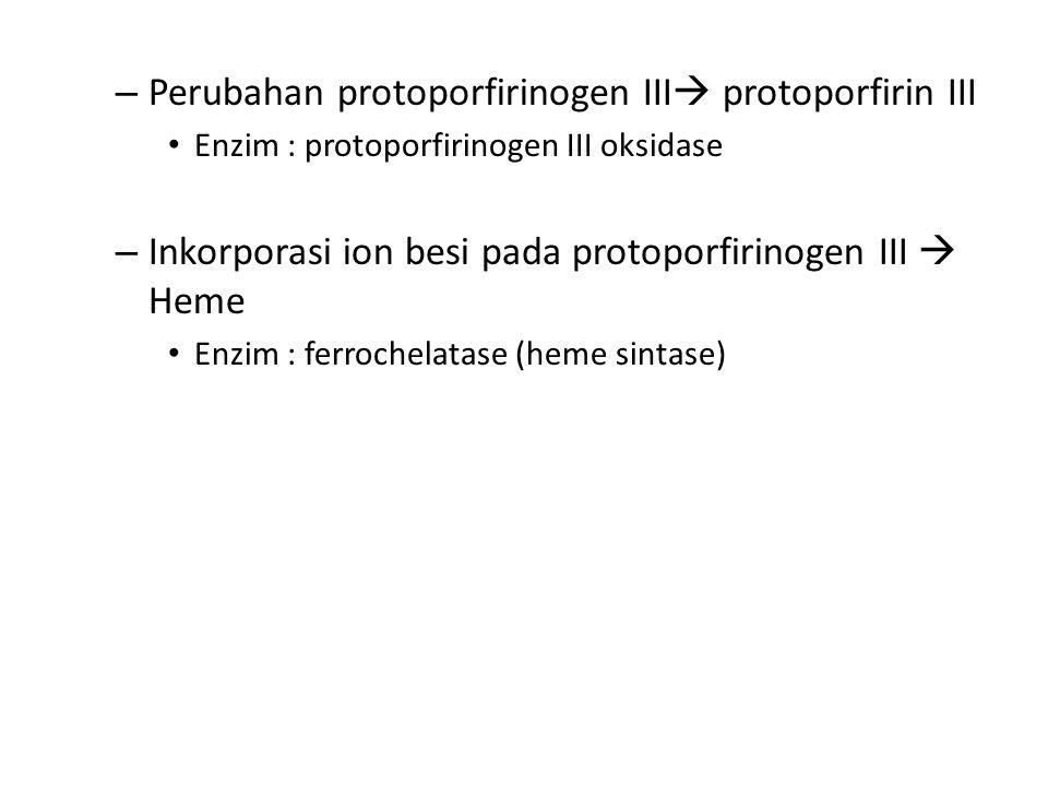 – Perubahan protoporfirinogen III  protoporfirin III Enzim : protoporfirinogen III oksidase – Inkorporasi ion besi pada protoporfirinogen III  Heme Enzim : ferrochelatase (heme sintase)