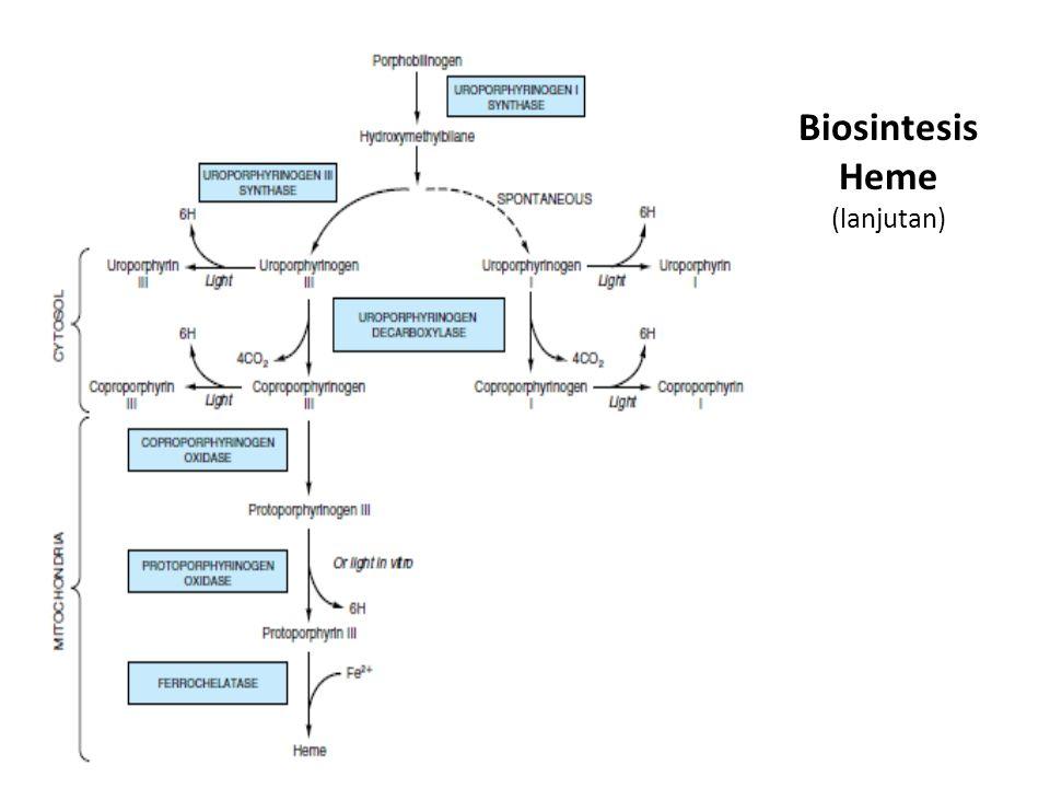 Biosintesis Heme (lanjutan)